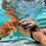 FÜR ein einheitliches Hundehaltegesetz