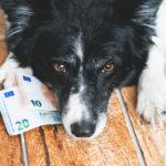 FÜR eine zweckgebundene Hundesteuer